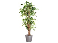 Artificial plant for inside Ficus Liana + round pot anthracite grey.